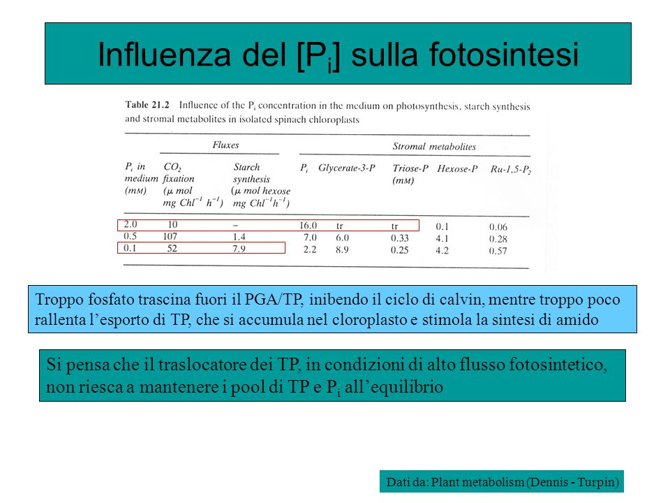 Influenza del [Pi] sulla fotosintesi